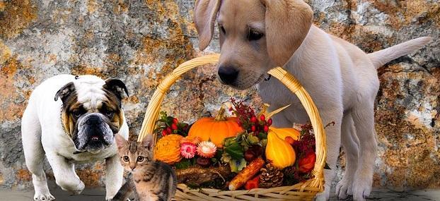 Pet Therapy e abilità sociali