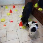 Pet Therapy Fidenza